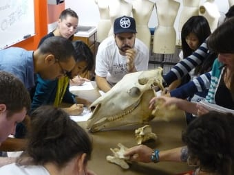 Getting to Great Ideas.FIT's fearless exhibit designer students_skull (340x255)