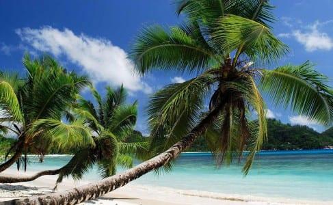 ECN 092014_INT_Tobago Beach debutesq real eastate