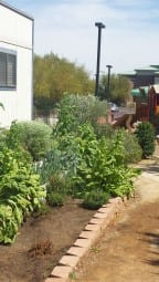 The revamped Shade Tree healing garden.