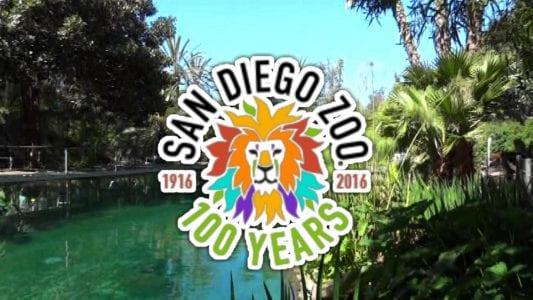 San Diego Zoo 100 years