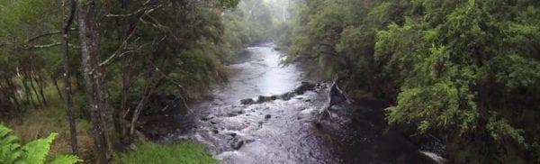 Big River Forest_LR