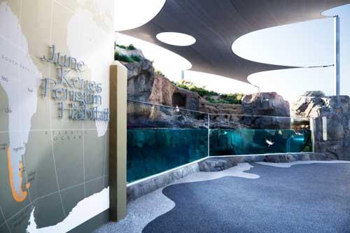Rescued penguins, visitors enjoy new exhibit at Aquarium of the Pacific
